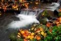 Картинка осень, вода, природа, листва, поток