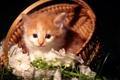 Картинка котенок, глазки, маленький