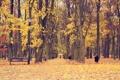 Картинка осень, листья, деревья, парк, путь, ребенок, скамейки