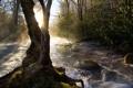 Картинка река, дерево, поток
