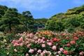 Картинка деревья, природа, розы, домик, trees, roses, the nature