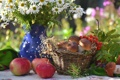 Картинка рябина, грибы, яблоки, натюрморт, ромашки