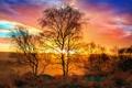 Картинка осень, небо, солнце, свет, природа, тепло, дерево