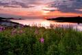 Картинка море, закат, цветы