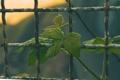 Картинка листья, лист, забор, ограда, смородина