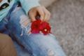 Картинка цветы, джинсы, лепестки
