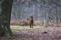 Картинка лес, деревья, лошадь