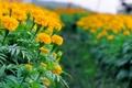 Картинка цветы, цветение, flowers, кустики, shrubs, flowering