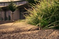Картинка 2560x1600, трава, дом, бордюр, trees, grass, sidewalk