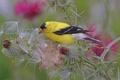 Картинка растение, сорняк, птица, былинка, перья, цвет