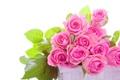Картинка розы, розовые, бутоны