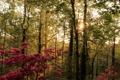 Картинка лес, солнце, деревья, березы, кусты, цветущие