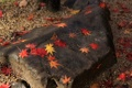 Картинка листья, осень, камень, красные, желтые, кленовые