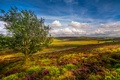 Картинка дорога, поле, небо, облака, дерево, долина, горизонт