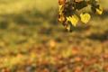 Картинка осень, листья, листва, листики