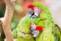 Картинка птицы, природа, попугаи