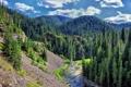 Картинка зелень, лес, деревья, река, холмы, вид, ель