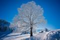Картинка зима, дорога, снег, природа, дерево, мороз