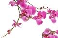 Картинка орхидея, орхидеи, лепестки, beauty, ярко-розовая, bright, macro