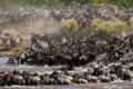 Картинка животные, природа, река, саванна, африка, водопой, большая миграция