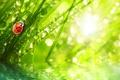 Картинка трава, вода, капли, макро, лучи, природа, роса