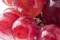Картинка капли, макро, красный, роса, ягоды, виноград, Grapes
