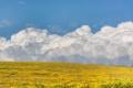 Картинка поле, облака, пейзаж, цветы, тучи, маки