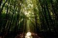 Картинка лес, лучи, свет, природа, дорожка