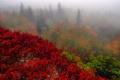 Картинка природа, осень, деревья, туман