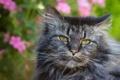Картинка лето, кот, фон