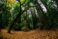 Картинка зелень, осень, лес, природа, листва