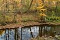 Картинка осень, лес, ручей, камни