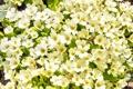 Картинка весна, цветение, blossom, flowers, spring