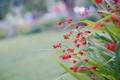 Картинка листья, макро, цветы, растение, сад, двор