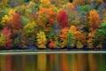 Картинка осень, лес, деревья, озеро, склон