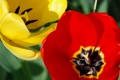 Картинка природа, цветок, желтый, лепестки, красный