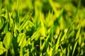 Картинка клевер, свет, трава, солнце