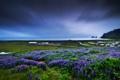Картинка море, небо, трава, пейзаж, цветы, природа