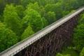 Картинка лес, деревья, мост, США, Virginia, Virginia Creeper Trail