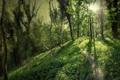 Картинка дорога, лес, пейзаж