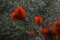 Картинка цветок, растение, экзотика