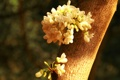 Картинка белые, ствол, солнечно, цветы, дерево