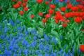 Картинка лепестки, сад, луг, тюльпаны