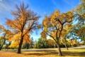 Картинка дорога, осень, небо, трава, листья, деревья, парк