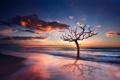 Картинка пляж, природа, озеро, рассвет