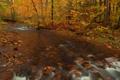 Картинка осень, лес, деревья, река, камни