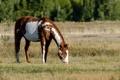 Картинка лошадь, конь, пастбище