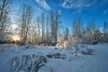 Картинка зима, небо, снег, деревья, природа, фото, лучи света