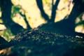 Картинка листья, макро, ветки, природа, дерево, фокус, кора