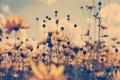 Картинка поле, цветы, обработка, желтые